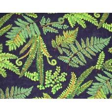 Ferns 1 - FQ